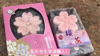 【ぶらり北京】花よりアイス?玉淵潭公園・桜まつり編